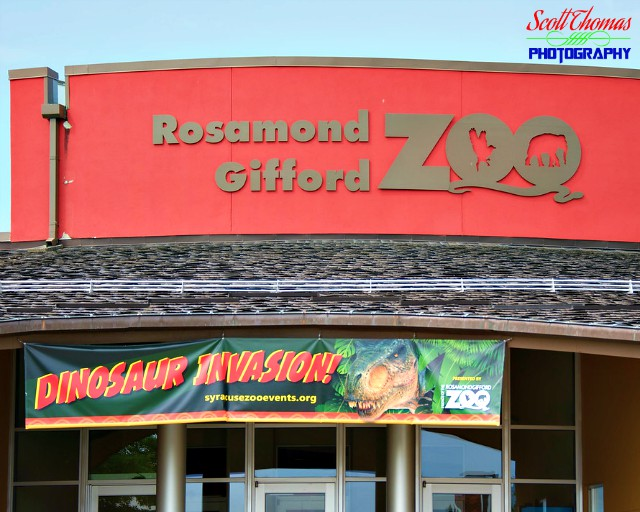 Dinosaur Invasion at the Rosamond Gifford Zoo