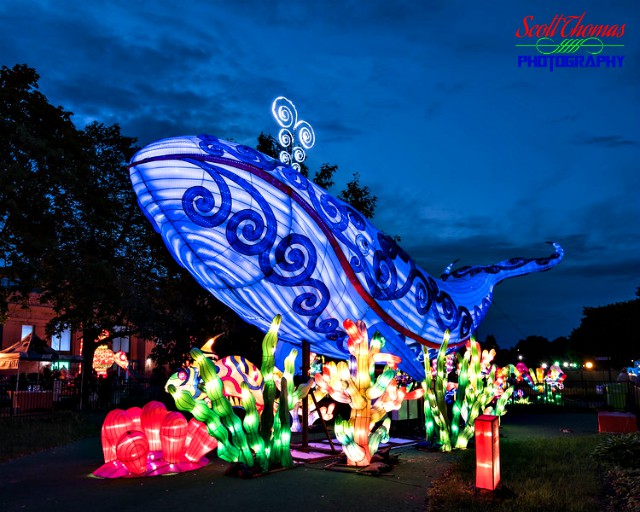 New York State Chinese Lantern Festival Blue Whale