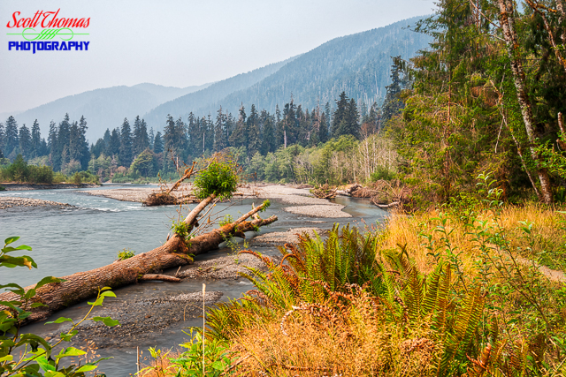 Hoh River Valley