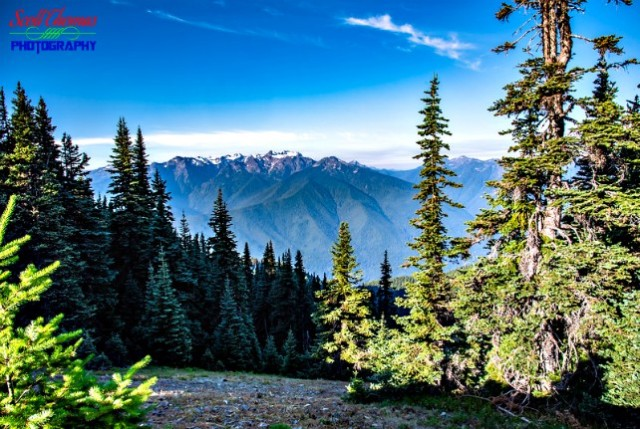 Olympic Mountains from Hurricane Hill