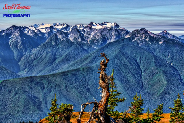 Olympic Mountains from the top of Hurricane Hill